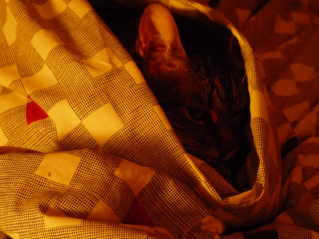She started hiding in my covers