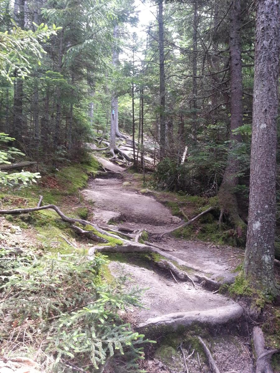 Bald Mountain Hiking Trail