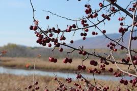 Marais de la Riviere des Cerises Magog Quebec