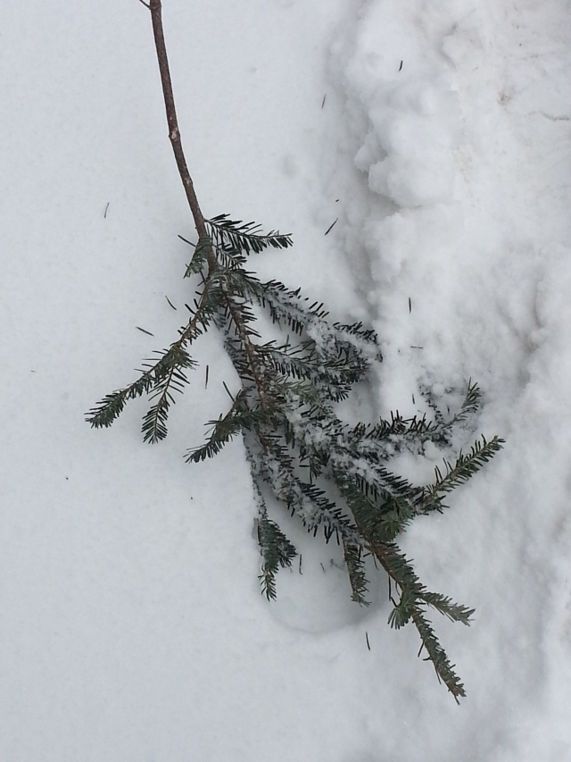 One branch in the snow