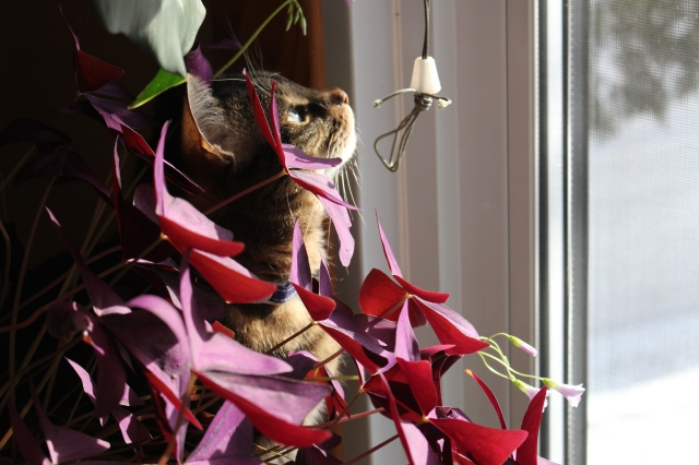 My cat sitting/playing by the window among the plants