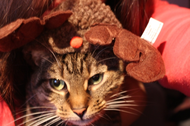 My cat in her 2 minutes as a reindeer ;)