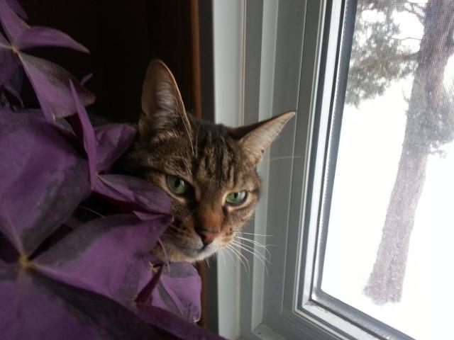 My cat in her spot!