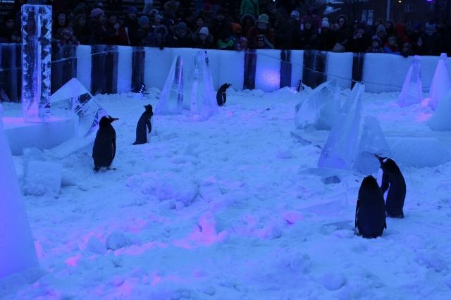 Penguins Biodome