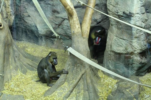 Granby Zoo