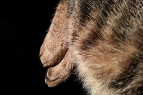 Cat hind paws