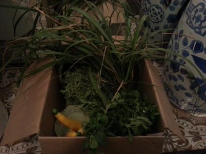 Vegetable Herb Harvest
