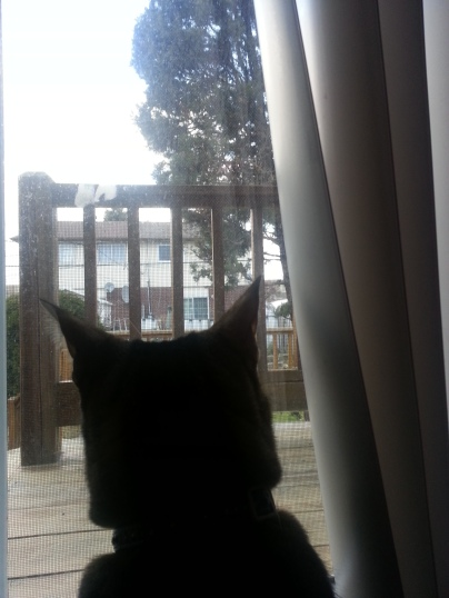 My cat's POV looking out the balcony door