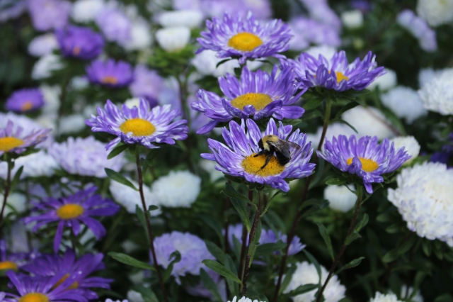 bees in flowers