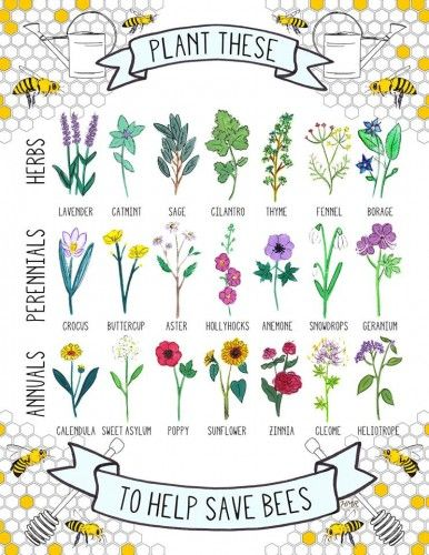 plants to help save bees