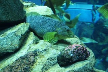 Ripleys Aquarium of Canada Toronto