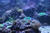 Ripleys Aquarium of Canada Toronto
