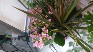 Indoor plants looking healthy