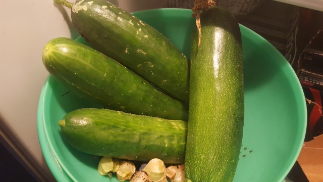 Zucchini and Cucumbers