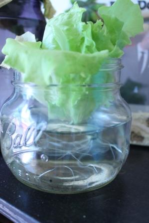 Lettuce Revival