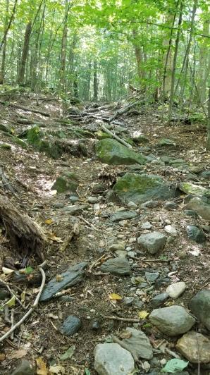 Reserve Naturelle des Montagnes Vertes